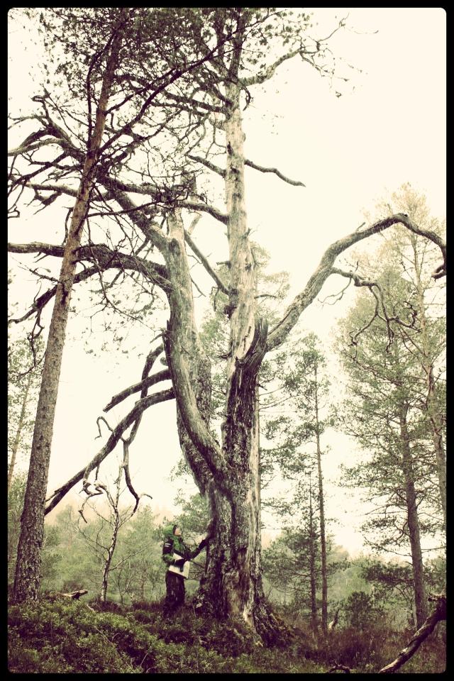 urskog