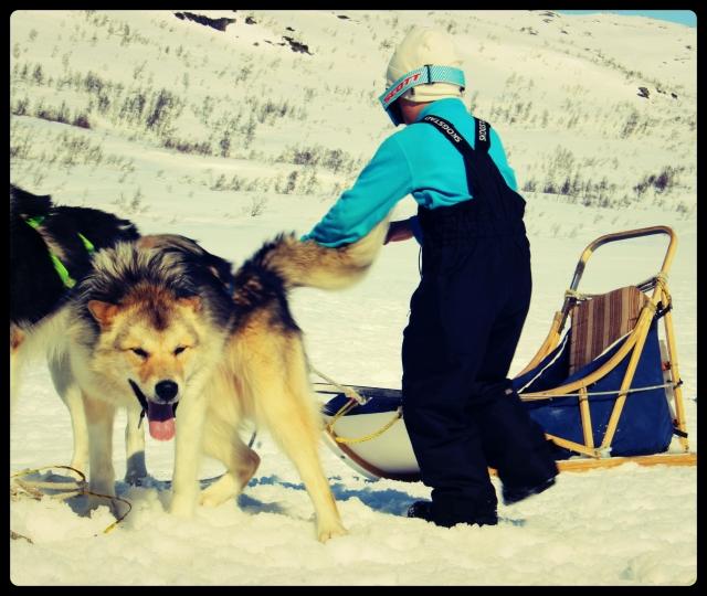hund_1