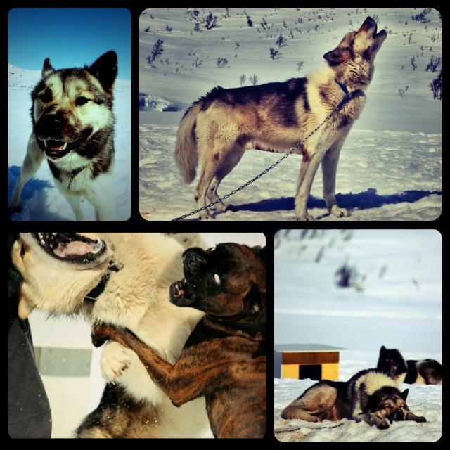 hunder_collage