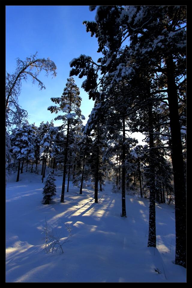winterwonderland 1