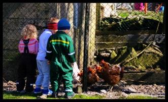 barnas turlag hønsehus 3
