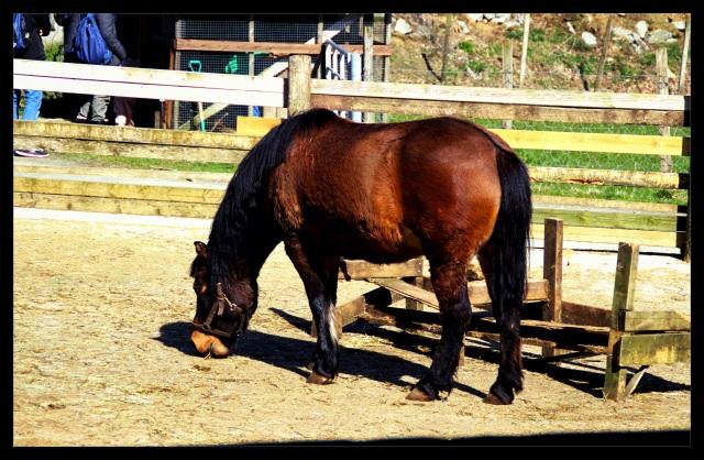 barnas turlag hest