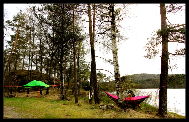 tentsile and hammock