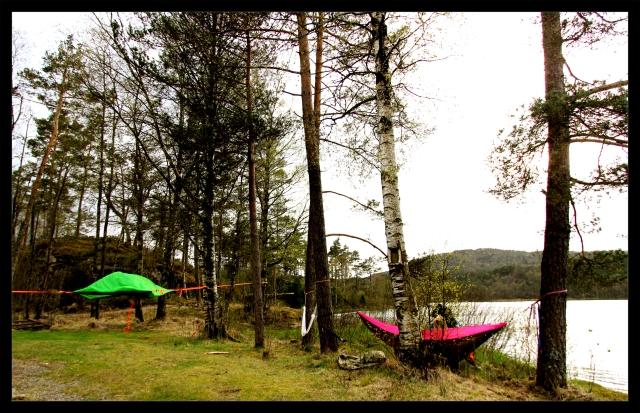tentsile and hammock