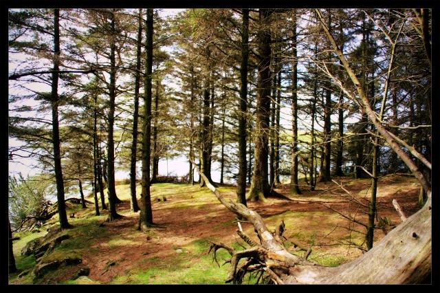 perfekt skog