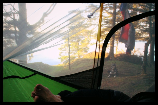 tentsile morning1