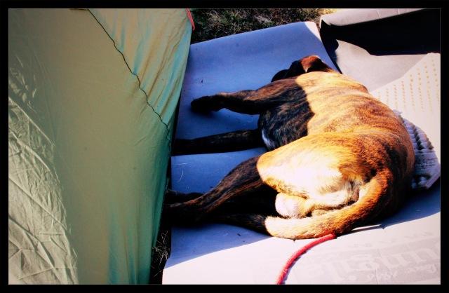 telttur samson